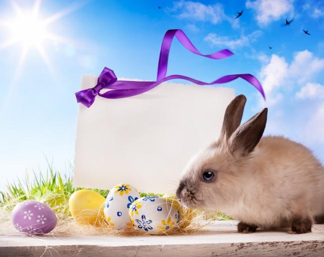 可爱小兔子图片下载